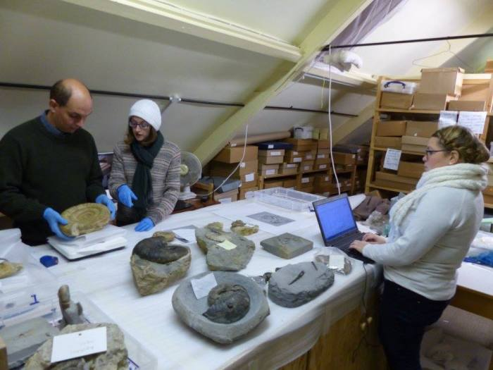 Selecting fossils for redisplay at Bridport Museum